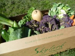 Organic Family Box - Vegetable Only